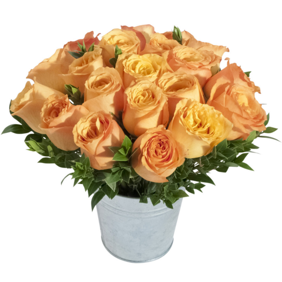Orange roses in a pail